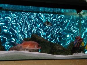 Фото: Особенности водоема у вас дома