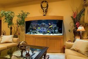 Аквариум из поликарбоната — надежный водоем у вас дома