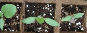 Фото: Подкормка для растений