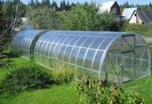 Теплицы «Воля» из поликарбоната — прочные парники для суровых климатических условий