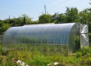 Теплица «Дачная-Двушка» из поликарбоната — парник для выращивания богатого урожая