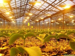 Освещение теплицы из поликарбоната— важное условие для богатого урожая
