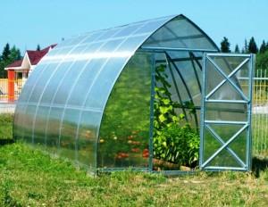 Теплица «Дачная Стрелка» из поликарбоната — парник для выращивания качественных культур своими руками