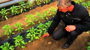 Фото: Высадка растений