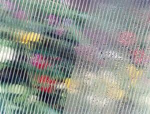 Фото: Конденсат в теплице из поликарбоната
