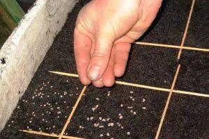 Фото: Высаживание семян
