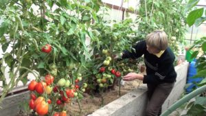 Фото: Условия выращивания