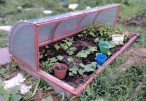 Фото: Выращивание растений